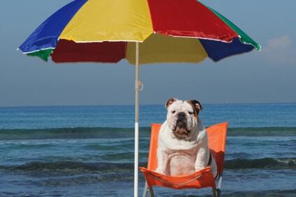 Cuidados com o seu animal nos dias mais quentes