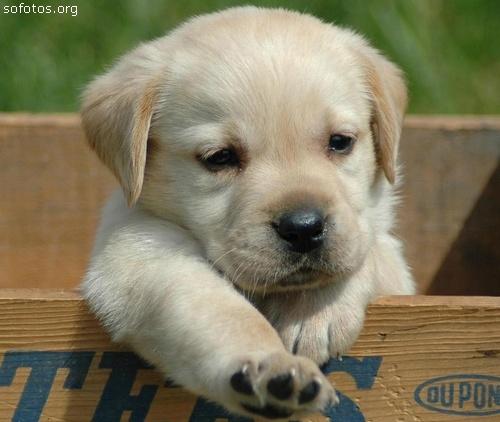 Ensaio fotográfico incentiva a adoção de animais de abrigo